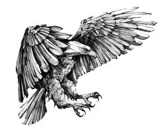 eagle on behance drawings amp illustrations eagle Trendy Tattoos, New Tattoos, Cool Tattoos, Wing Tattoos, Celtic Tattoos, Tattoo Sketches, Tattoo Drawings, Eagle Drawing, Eagle Art