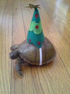A bit late for the holidays... Just like a turtle