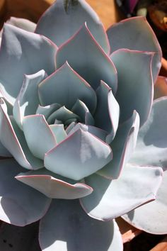 blooming succulents: cocoon home design | Botanical and Outdoor ...
