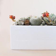 Raw Earth Hanging Planter - Chalk White– Pigment Large Hanging Planters, Herbs Indoors, Ceramic Pots, Plant Holders, Accent Decor, Planter Pots, Vibrant Colors, Centerpieces, Ceramics