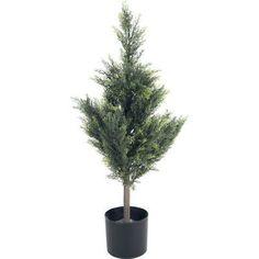 Romano Cedar Tree in Pot