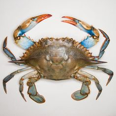 See Bill Sallans Salacious Seafood – Design & Trend Report Crab Art, Fish Art, Crab Painting, Crab Tattoo, Louisiana Art, Ocean Creatures, Am Meer, Beach Art, Marine Life