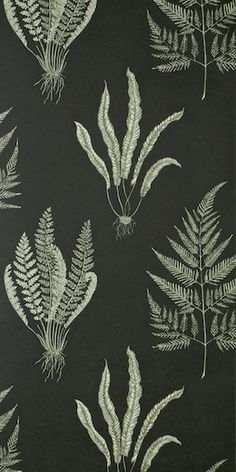 Behang: A Painters Garden, Woodland ferns charcoal Sanderson Fern Wallpaper, Wallpaper Stores, Fabric Wallpaper, Pattern Wallpaper, Wallpaper Lounge, Wallpaper Decor, Textiles, Textile Patterns, Textile Design