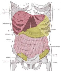 Liver Cleanse Diet Flush