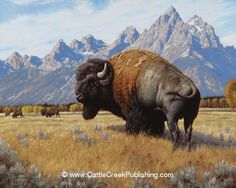 "of the West"" Spirit of the West A bull buffalo, or bison, enjoys the days of summer in front of the Teton Mountains.Spirit of the West A bull buffalo, or bison, enjoys the days of summer in front of the Teton Mountains. Wildlife Paintings, Wildlife Art, Animal Paintings, Buffalo Animal, Buffalo Art, American Bison, Native American Art, Buffalo Pictures, Buffalo Painting"