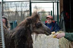 foto: Zoo Plzeň