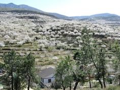 Valle del Jerte en flor