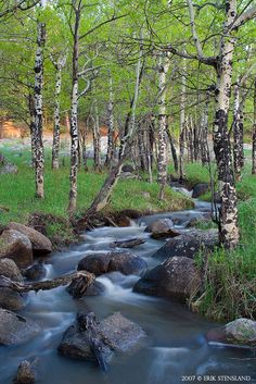 aspens in spring, Rocky Mountain National Park, Colorado | Eric Stensland, Images of RMNP