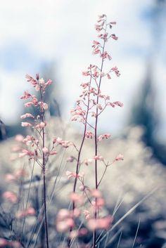 Vintage beautiful vintage flowers at sunrise Premium Photo – Photography Flor Iphone Wallpaper, Natur Wallpaper, Flower Wallpaper, Wallpaper Backgrounds, Phone Backgrounds, Image Nature, Flower Aesthetic, Flower Backgrounds, Pretty Wallpapers