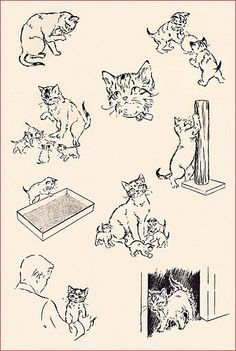 """Illustration from """"Kittens and Cats"""", 1957"""