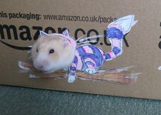 This is David Bowie.You Need To See The World's Most Fashionable Hamster
