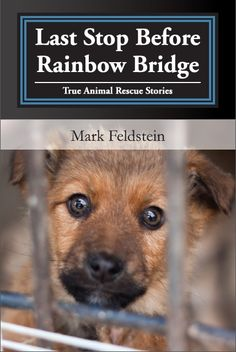 Do you know of any books about no-kill shelters?