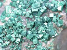 Metatorbernite, Cu(UO2)2(PO4)2•8(H2O),  Contencas mine, Portugal. Pastel green square tabular crystals from 1-2mm