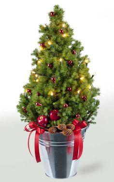 Weihnachtsbaum Goldica, 50 - 60 cm hoch, mit Zinkeimer + Deko