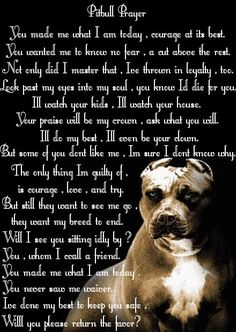 Pit Bull Prayer. We own a Boston Terrier/Pitbull mix. He was a pound hound that we adopted. While he looks like a giant Boston Terrier, but has a Pit heart & soul. This so reminded me of him. Just eager to please, loves his family, and adopted special needs English Mastiff sister.