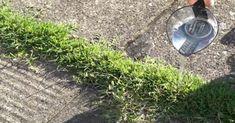 12 Πανέξυπνες Χρήσεις του Ξυδιού στον Κήπο ή την Αυλή σας που δεν είχατε ποτέ φανταστεί και θα σας λύσουν τα Χέρια! -idiva.gr