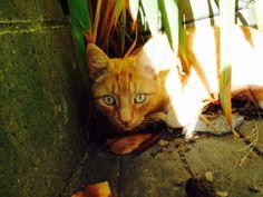 My amazing cat Jethro