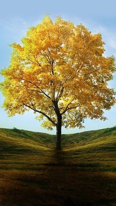 !!TAP AND GET THE FREE APP! Nature Trees Yellow Leaves Grass HD iPhone 5 Wallpaper
