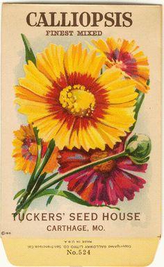 CALLIOPSIS! (Mejor mezclado) Vintage flor semilla paquete total semilla casa litografia (Carthage, Missouri) de gardenlelah en Etsy https://www.etsy.com/es/listing/86407838/calliopsis-mejor-mezclado-vintage-flor