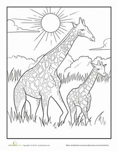 This Baby Giraffe Coloring Page Features A Mother And Child Duo Strolling Peacefully Across The African Savanna