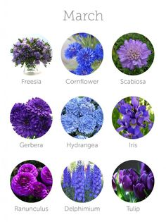 Wedding Budget wedding flowers in season - march More - Want to save money on your wedding floral budget? Make sure to choose in-season flowers for your wedding bouquet, centerpieces or other floral arrangements. Arrangements Ikebana, Wedding Flower Arrangements, Floral Arrangements, Wedding Bouquets, Table Arrangements, Wedding Dresses, March Wedding Flowers, Floral Wedding, March Wedding Colors