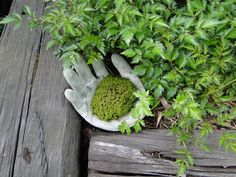 Mossy cement hand