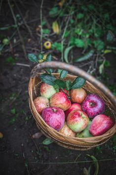 photo Autumn by Eva Kosmas Flores-15_1.jpg