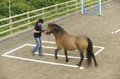 SBend 300x199 Horse Agility The Benefits