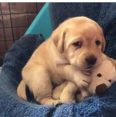 Things that make you go AWW! Like puppies, bunnies, babies, and so on. A place for really cute pictures and videos! Super Cute Puppies, Cute Baby Dogs, Cute Funny Babies, Cute Cats And Dogs, Cute Dogs And Puppies, Baby Puppies, Cute Baby Animals, Animals And Pets, Funny Animals