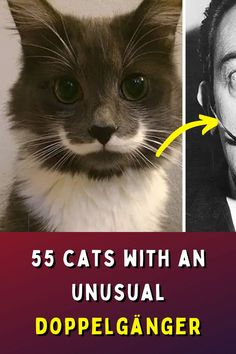 Cats are beautiful creatures and, apart from nine lives, apparently they also have a tendency to look like other things or even people. Let's take a look at some of the cutest ones.