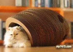 「創意寵物用品」的圖片搜尋結果