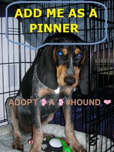 Love hounds, we have a redbone,treeing walker mix & treeing walker coonhound. This so sad!  Adopt a hound! After my first hound I fell in love. I cannot picture my life without one!