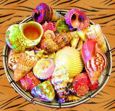 Sea shells!