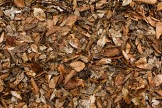 texture of fallen leaves on the ground