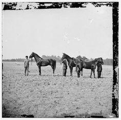 Cold Harbor, Virginia. U.S. Grant's horses: on left, EGYPT, center, CINCINNATI, right, JEFF DAVIS.