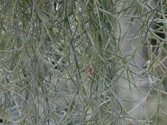 photo prise chez TSILLANDSIA PROD 28 chemin du cailar à Nîmes 30740 Le cailar par Gadorce (www.gadorce.com)