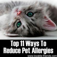 Top 11 Ways To Reduce Pet Allergies.