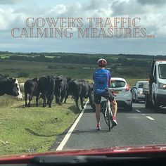 We don't have traffic lights in Gower...⠀ #traffic #cefnbryn #trafficjam #trafficlight #gower #gowerholidays #gowerpeninsula #commonland #cows #cowscrossing #lovegower Traffic Calming Measures, Gower Peninsula, Traffic Light, Swansea, South Wales, Cows, Lights, Holiday, Vacations