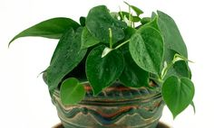 20 Houseplants to Clear Toxins From Your Home