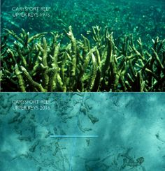 Florida Reefs Are Dissolving Much Sooner Than Expected
