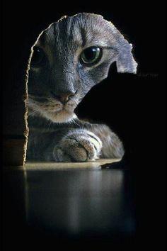 Você pode sair ... Eu só quero falar com você!