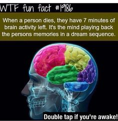 Better Your Brain with These 10 Apps WTF Fun Fact When a person dies, they have 7 minutes of brain activity left. It's the mind playing back the person's memories in a dream sequence. The More You Know, Good To Know, E Mc2, Wtf Fun Facts, Random Facts, Strange Facts, True Facts, Random Stuff, Brain Activities