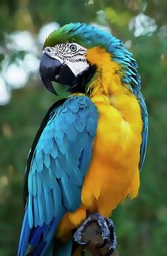 Amazing colours of blue and yellow on this vibrant parrot. Click here to shop the new Matthew Williamson holiday collection.