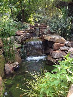 koi pond by Baldi gardens