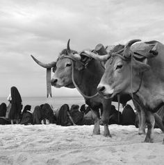 Artur Pastor  Série Nazaré. 1953/57. Photo P, Modern Photography, Shades Of Grey, Portuguese, Cattle, Archaeology, Logos, Monochrome, Country