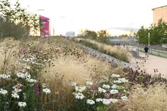 Olympic Gardens Europe - Sarah Price Landscapes