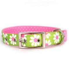Green Daisy Uptown Dog Collar