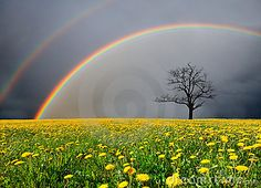 Field and dead tree under cloudy sky with rainbow  © Alexander Ozerov | Dreamstime.com