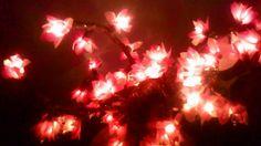 Arboles y Bonsais Led  Los hicimos pensando en navidad, pero son tan lindos que se ven bien todo el año   Arboles únicos en su clase, hechos a mano por nuestros artesanos con luces led, grano de arroz y tradicionales.  Informes: 3144309086 - 3013667 / www.facebook.com/migatoylaluna Luz Led, Christmas Tree, Facebook, Holiday Decor, Home Decor, Facts, Lights, Products, Hand Made