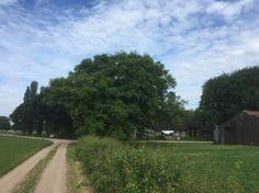 2017-06-10 Prachtige notenboom bij boerderij achter Huize De Bannink